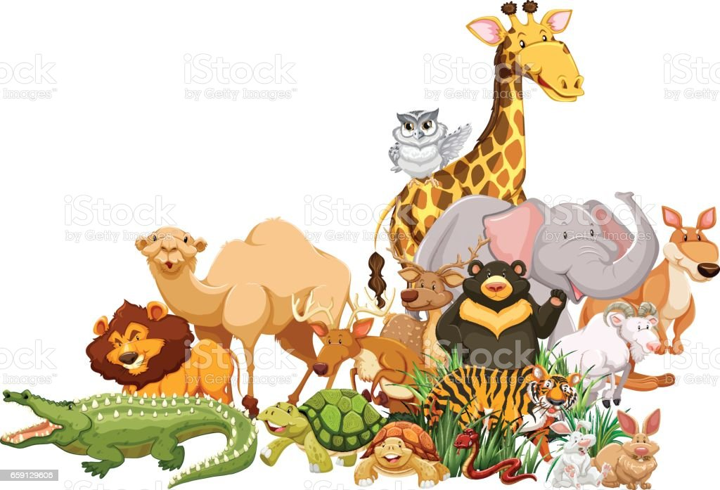 Different Types Of Wild Animals Together Stock Illustration ...