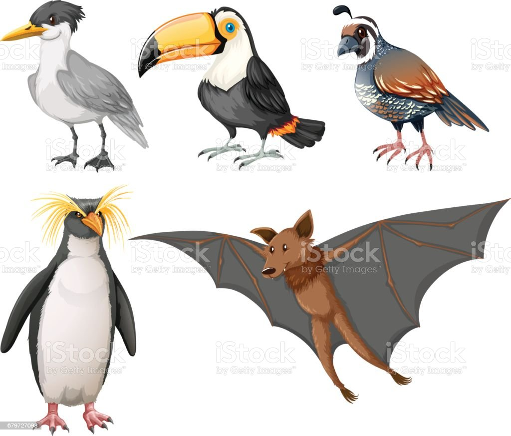 different types of wild birds stock vector art 679727098 istock