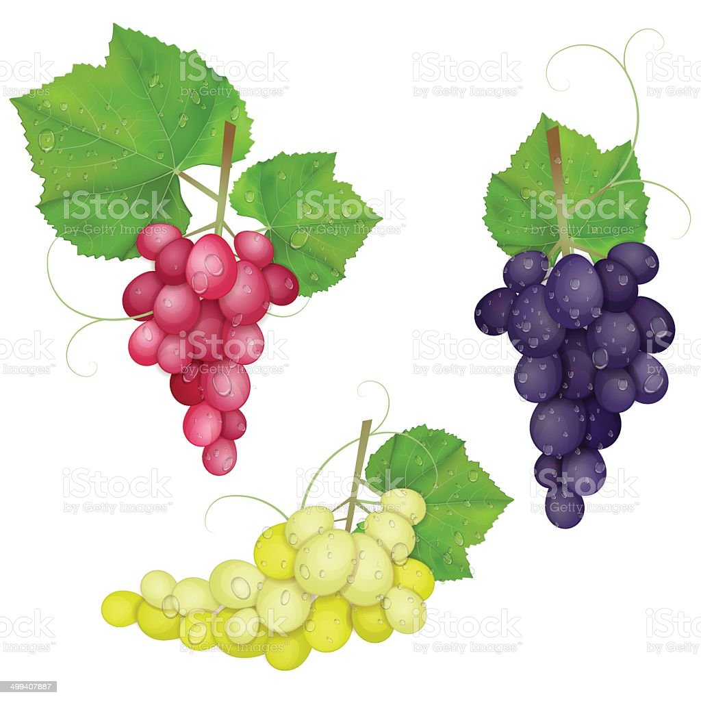 different varieties of grapes with leaves on white background vector art illustration