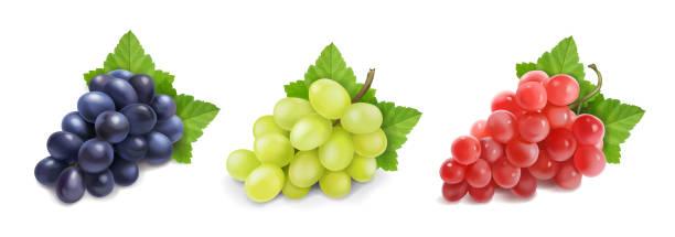 異なるワインブドウ。グリーンブラックレッドグレープ - マスカット イラスト点のイラスト素材/クリップアート素材/マンガ素材/アイコン素材