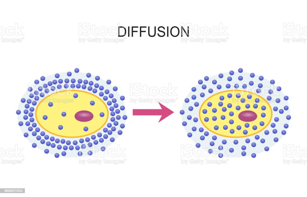 Diffusion Across Cell Membranes vector art illustration