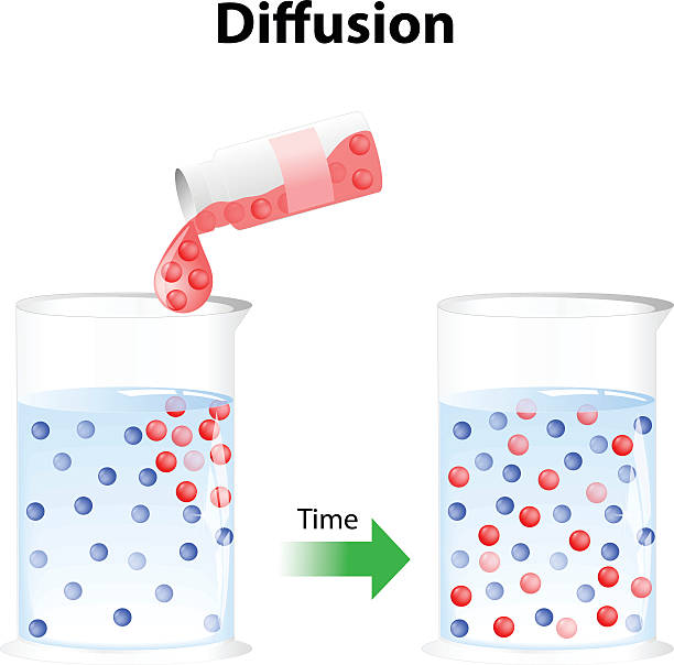 osmosis and diffusion experiment To fully comprehend the results of the egg experiment, it's helpful to understand the difference between diffusion and osmosis during the process of diffusion, molecules concentrated in one area move to an area with a lower concentration until they reach a natural equilibrium for example, if.