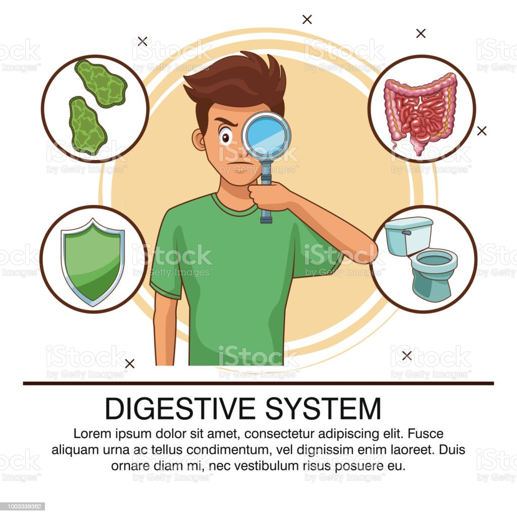 Digestive System Infographic Stock Vector Art More Images Of