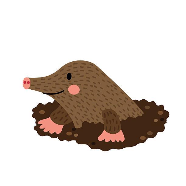 digging mole animal cartoon character vector illustration. - pelzmäntel stock-grafiken, -clipart, -cartoons und -symbole