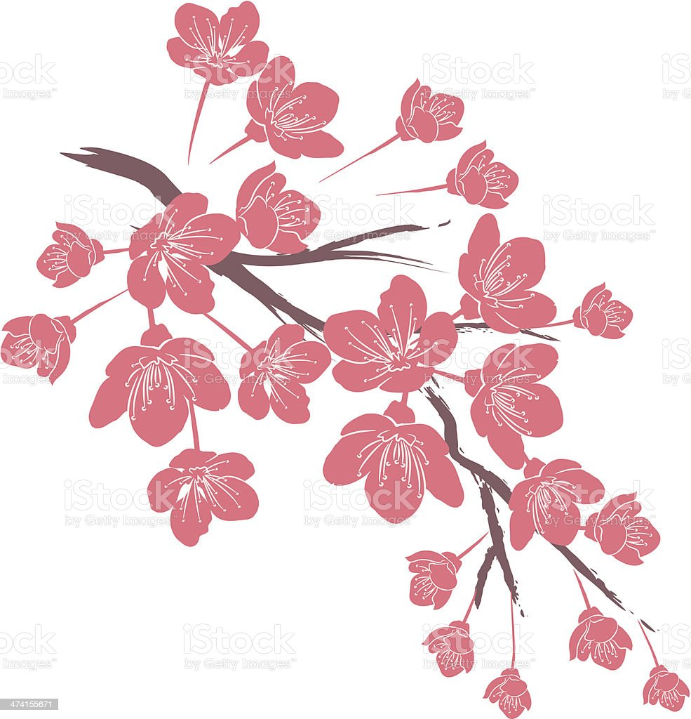 Digital dessin dune branche de fleur de cerisier rose - Cerisier en fleur dessin ...
