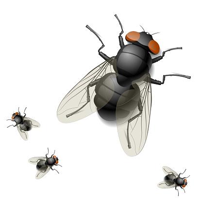 Digital rendering image of one big and three tiny houseflies