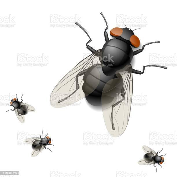Digital rendering image of one big and three tiny houseflies vector id115349263?b=1&k=6&m=115349263&s=612x612&h=j5mfcjsd yqtcz8zqzqfbqb6vor37k1mdbw5j94nj2a=