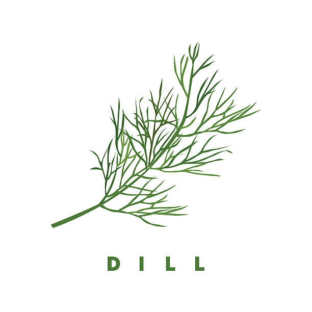 dill herb, food vector illustration, isolated logo dill herb, food vector illustration, isolated logo dill stock illustrations