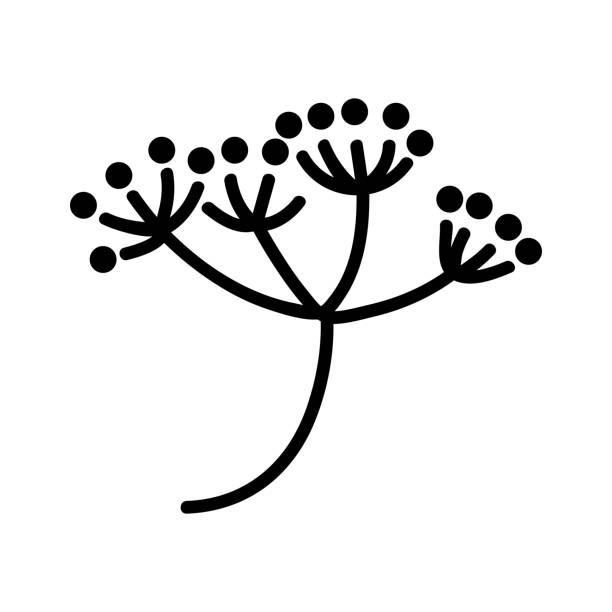 dill blütenstand symbol vektor umriss illustration - blütenstand stock-grafiken, -clipart, -cartoons und -symbole