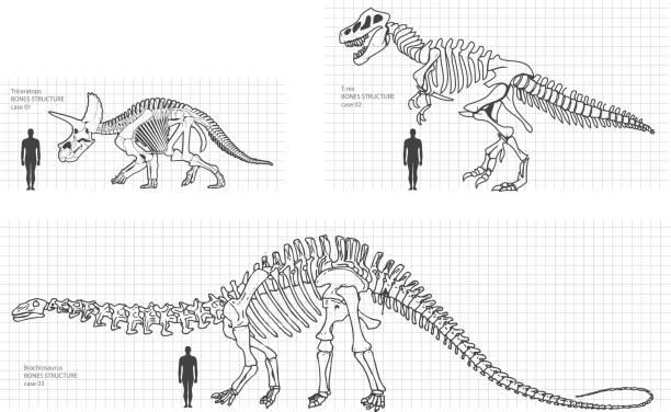 dinosaur archeology - animal skeleton stock illustrations