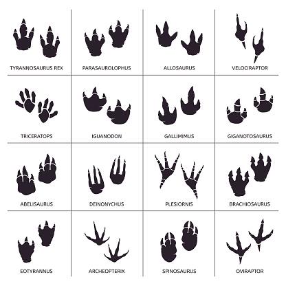 Dinosaur footprint. Reptile foot anatomy, ancient predator animals footprint tracks, paleontology dino traces vector illustration icons set