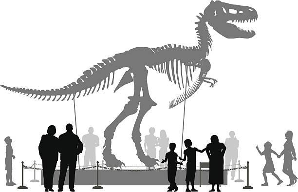 dinosaur museum - animal skeleton stock illustrations