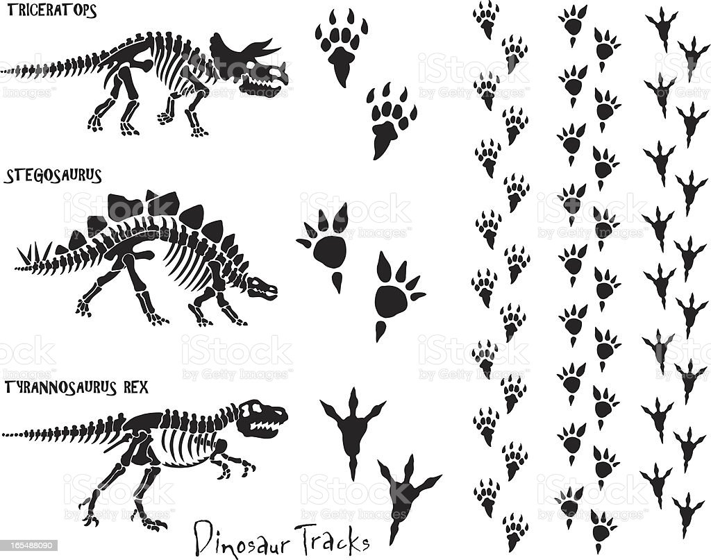 Dinosaur Skeleton & Footprints vector art illustration