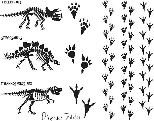 dinosaur skeleton & footprints - dinosaur stock illustrations, clip art, cartoons, & icons