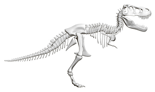 Dinosaur skeleton. Side view. 3D. Vector illustration