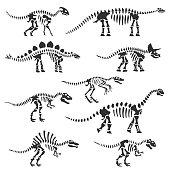 Vector tyrannosaurus dinosaur fossil skeleton. Prehistoric predator, jurrasic giant animal icon. Paleontologu and archeology artifact. T-rex monster white silhouette.
