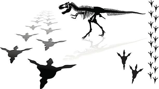 dinosaur - tyrannosaurus rex - animal skeleton stock illustrations