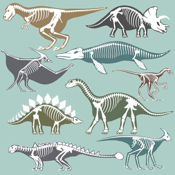 dinosaurs skeletons silhouettes set fossil bone tyrannosaurus prehistoric animal dino bone vector flat illustration - animal skeleton stock illustrations