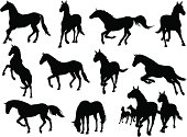 A comprehensive collection of horse illustrations. This stock illustration set includes horses running, walking, jumping and standing. Enjoy!