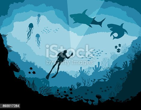 Divers and sharks, reef Underwater wildlife