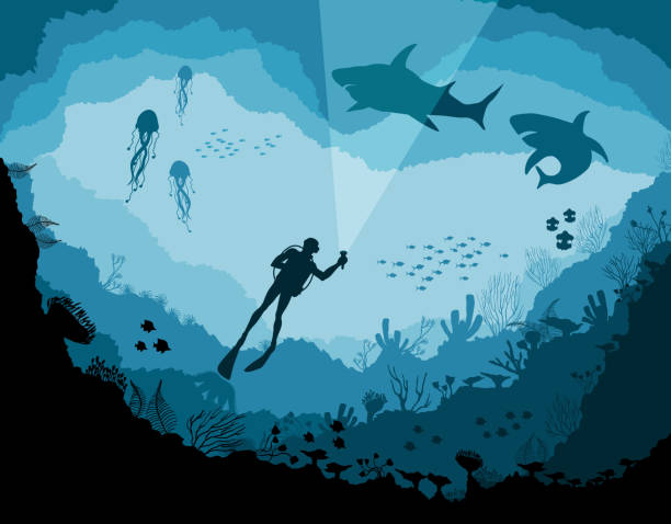 stockillustraties, clipart, cartoons en iconen met duikers en haaien, reef onderwater wildlife - depth vector