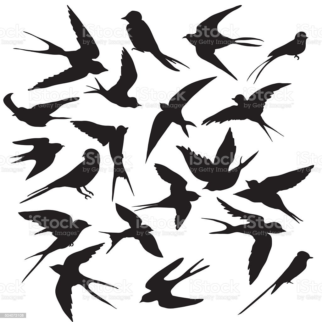 Diverse collection of silhouettes birds vector art illustration