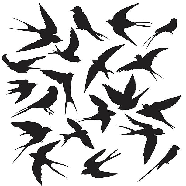 Royalty Free Birds Clip Art, Vector Images & Illustrations - iStock