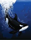 Diving Orca