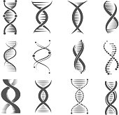 Dna spiral icons. Helix human technology research molecule and chromosome medical and pharmaceutical vector symbols. Dna and chemistry, medical science biochemistry helix illustration