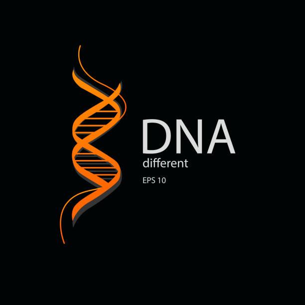 dna-spirale-vektor-logo in der farbe orange - dna stock-grafiken, -clipart, -cartoons und -symbole