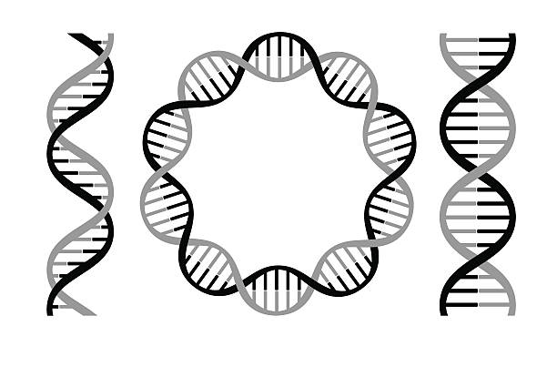 dna strands Vector illustration of dna strands. helix model stock illustrations
