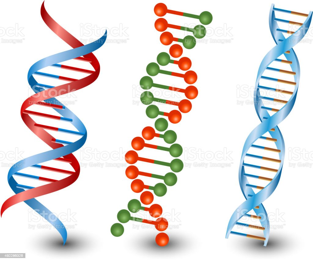 Dna strands. Vector on the white background vector art illustration