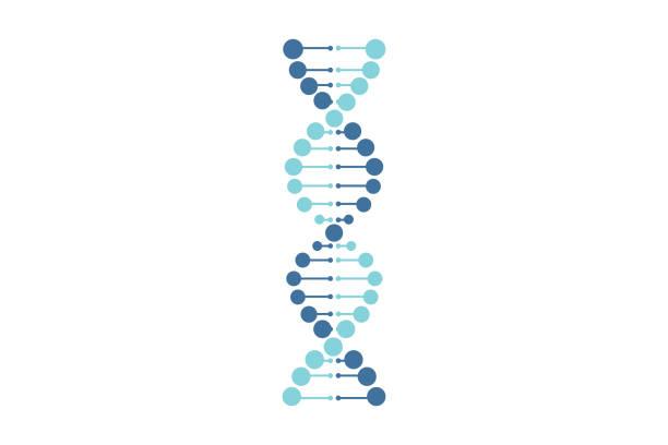 dna vector blue line white background - дезоксирибонуклеиновая кислота stock illustrations