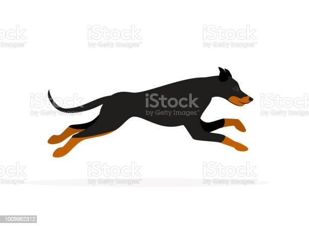 Doberman pinscher dog running isolated vector graphic vector id1009952312?b=1&k=6&m=1009952312&s=612x612&h=eo3g3ntbmual u4xn79n8yqxksv9x 9nsipql5sanrc=
