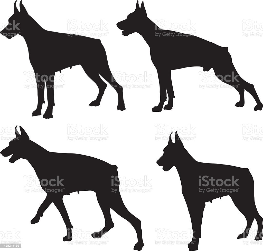 doberman silhouette royalty free stock vector art
