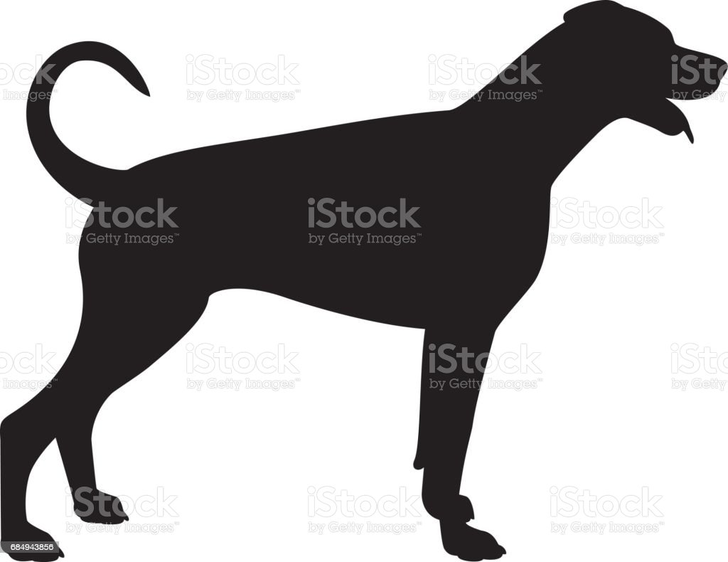 dobermann pinscher dog vector silhouette royalty free stock vector art