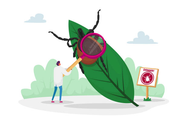 Doctor Character with Magnifying Glass Stand at Huge Leaf with Tick and Warning Sign with Mite Image. Danger of Bite with Tick in Forest and on Nature Outdoor Territory. Cartoon Vector Illustration Doctor Character with Magnifying Glass Stand at Huge Leaf with Tick and Warning Sign with Mite Image. Danger of Bite with Tick in Forest and on Nature Outdoor Territory. Cartoon Vector Illustration arachnid stock illustrations