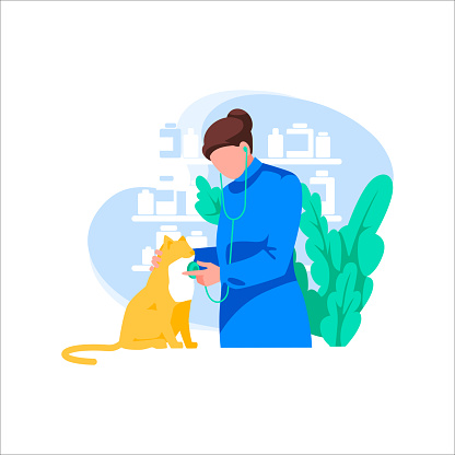 Doctor with stethoscope examines cat, isolated on white background. Concept of medicine and pet care