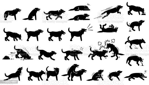 Dog actions reactions postures and body languages vector id1159524897?b=1&k=6&m=1159524897&s=612x612&h=xnd9k9t8z6rxbddllrxrfqz0sof2pknee0witk s88i=
