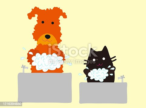 A cute dog and a black cat washing hands with soap.