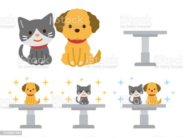 Dog and cat on the examination table vector id1048587584?b=1&k=6&m=1048587584&s=612x612&h=nnqqklnfc9b0o vkdexhr ydwxfirg0gxi3onabg4ha=