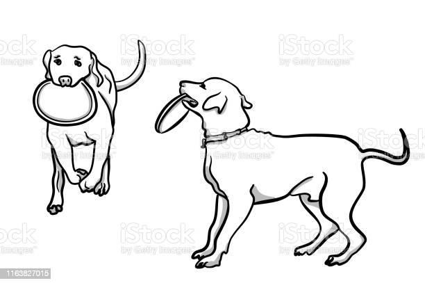 Dog and frisbee vector id1163827015?b=1&k=6&m=1163827015&s=612x612&h=3fwf nw4lunfxnapwmgqnnjjpjs5yjvv9735zdguj8s=