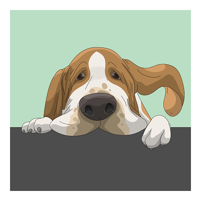 Portrait of dog, Basset Hound with boring face, graphic poster style use for print