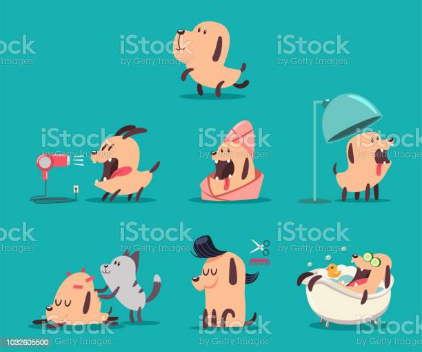 Dog beauty salon funny puppies character in the spa grooming vector vector id1032605500?b=1&k=6&m=1032605500&s=612x612&h=rtxatmhwo51ujdwvcovexmhn7pqmqo ocu4vvg2nozu=