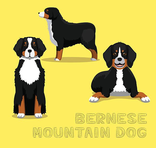 Dog Bernese Mountain Dog Cartoon Vector Illustration vector art illustration