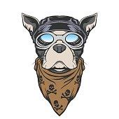 Dog biker illustration in vector