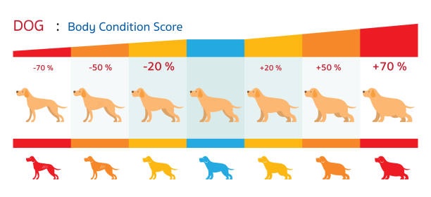 stockillustraties, clipart, cartoons en iconen met hond body condition score - toestand