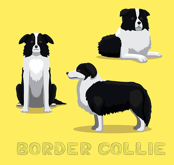 hunde-border-collie comic vektor-illustration - collie stock-grafiken, -clipart, -cartoons und -symbole