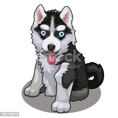 istock Perro de raza husky con ojos azules aisladas. Vector de ...