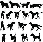 Different dog breeds in different positions.